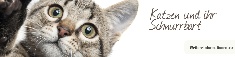 Katzen und Ihr Scnurrbart