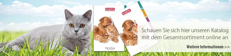Katalog Katze